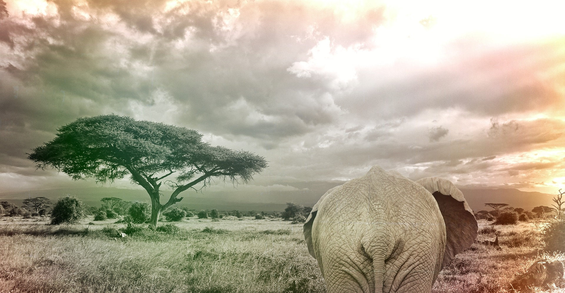 elephant-1067474_1920